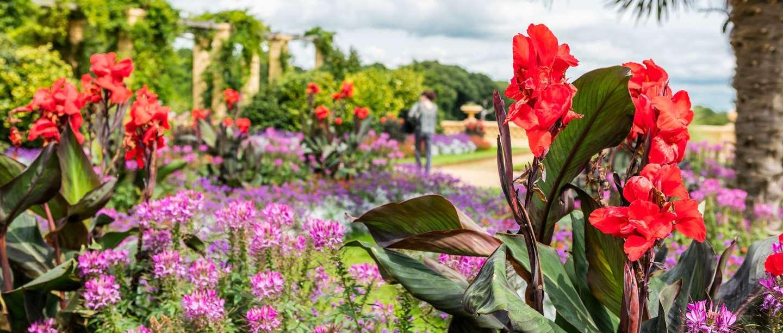 Image: terrace at Osborne